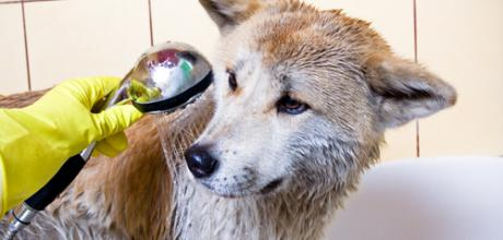 Что делать, если шерсть собаки неприятно пахнет