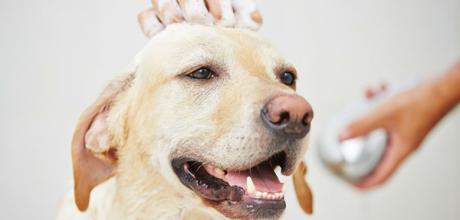 Как использовать кондиционер для собаки