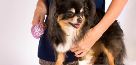 Как подготовить собаку к выставке?