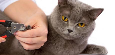 Стрижка когтей кошки – советы хозяину