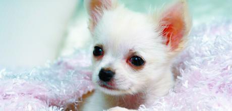 Уход за шерстью щенков и котят – советы грумера