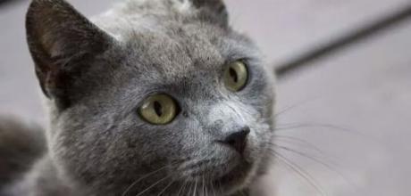 Тусклая шерсть у кошки – причины и решение проблемы