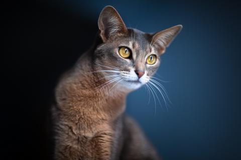 Уход за короткошерстными кошками и собаками – советы грумера