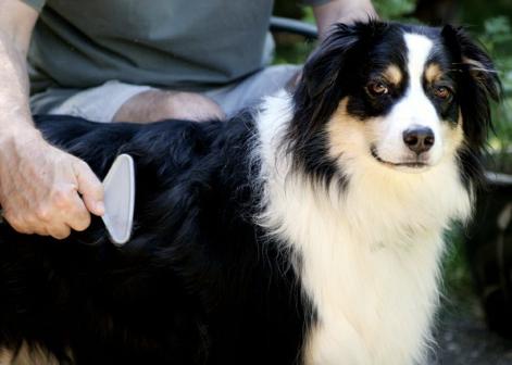 Расчески для собак: выбираем подходящий инструмент для любимца