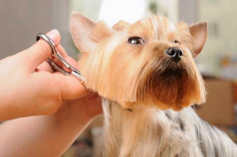 Как подстричь собаку в домашних условиях?