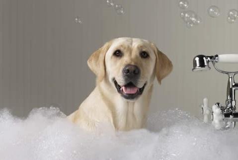 Как помыть собаку? Рекомендации по правильному купанию собак