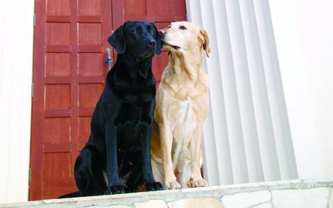 Советы грумера по применению оттеночных шампуней для собак и кошек