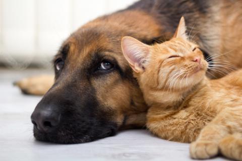 Все как у людей: лечим перхоть у собаки