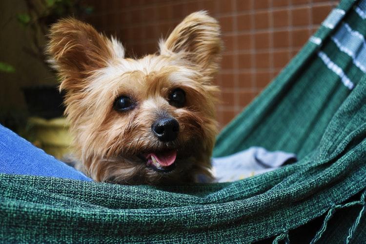Предметы для ухода за собакой