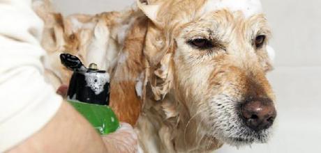 Аллергия на шампунь у собак