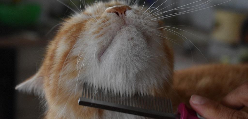 Предметы для ухода за кошкой