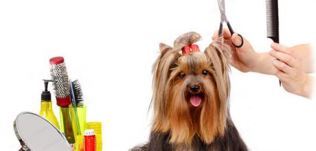 Как подстричь йоркширского терьера в домашних условиях