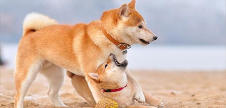Шампуни для рыжих собак
