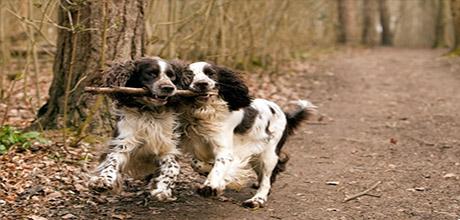 Защита лап у собак