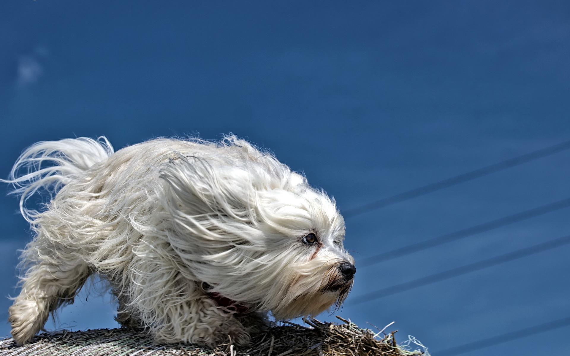 Как улучшить состояние шерсти собаки?