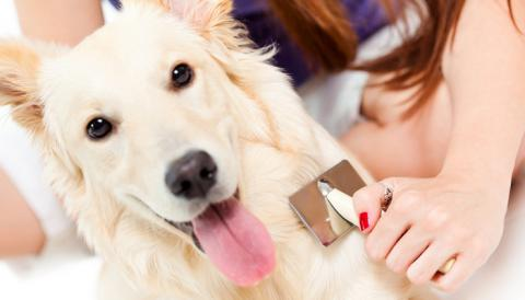 Домашний груминг собак