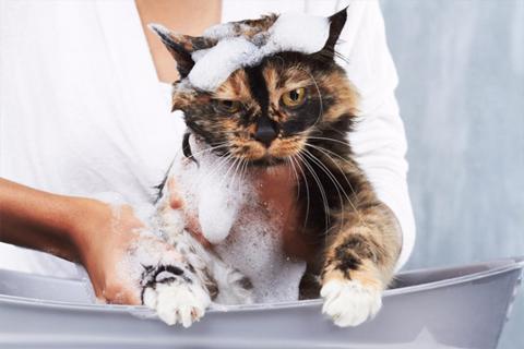 Купание кота: советы и рекомендации