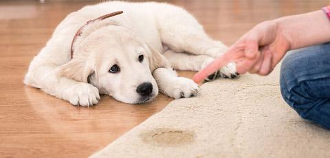 Что делать, если собака не дает стричь когти?