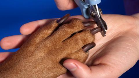 Как стричь когти собаке?