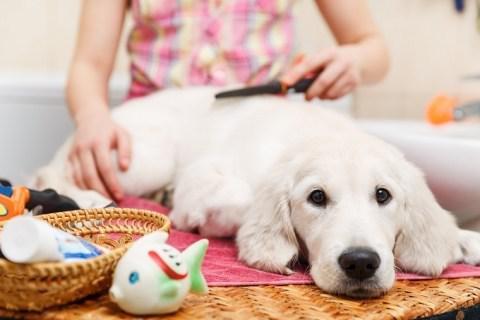 Как правильно вычесывать собаку?